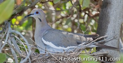 Las Palomas Wildlife Management Area (WMA) Offers Great Public Hunting
