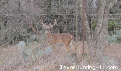 The Deer Management Permit (DMP) in Texas