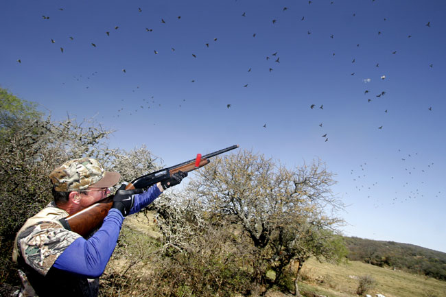 Dove Hunting Texas - Public Hunting Lands an Option