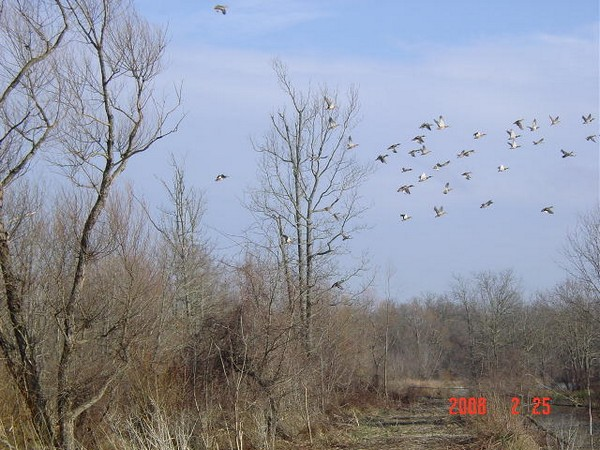 Texas Public Hunting Lands and the APH Permit