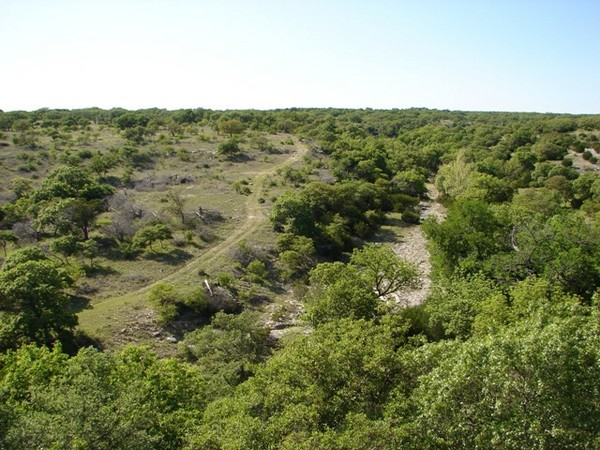 Wildlife Management for Landowners in Central Texas