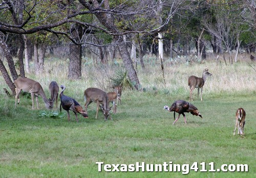 Turkey Hunting in Texas Takes Habitat