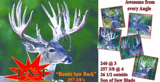 Buy Deer in Texas - Whitetail Deer For Sale