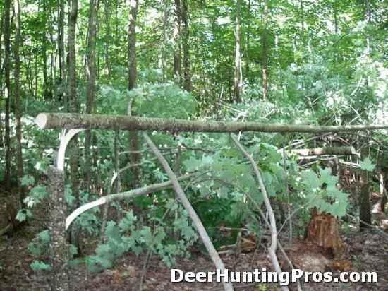 Deer Habitat Management: Hinge Cutting or Half Cutting Trees