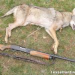 Coyote Shot During Turkey Season, Responded to Crow Call