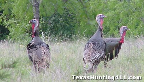 Spring Turkey Hunting in Texas!