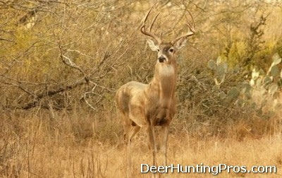 Deer Hunting for Whitetail Deer Management in Texas
