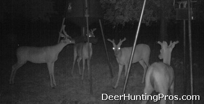 Deer Hunting Small Acreage