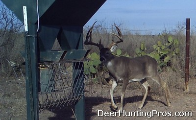 Deer Hunting: Feeding Record Rack Protein Pellets to Whitetail