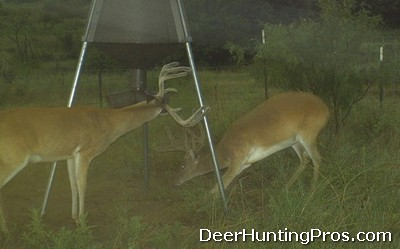 Deer Hunting: Antler Growth, Antler Damage and Game Cameras