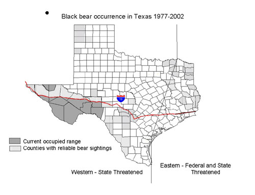 Black Bear Sightings in Texas