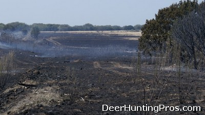 Deer Hunting: Habitat Management for Improved Whitetail Deer