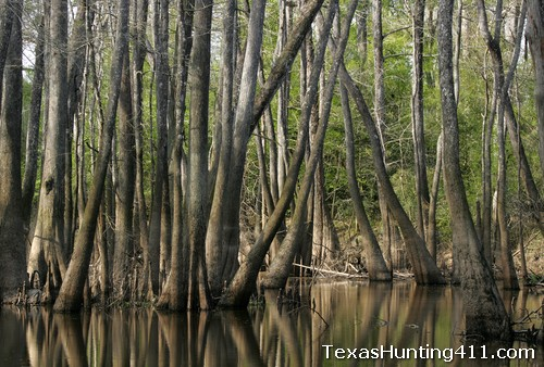 Wetland Habitat Management for Waterfowl and Duck Hunting in Texas