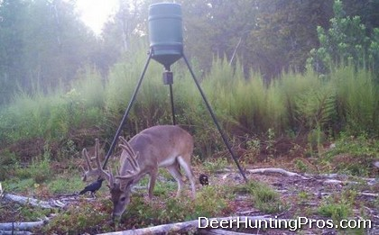 Deer Hunting in East Texas: Deer Lease Covered in Whitetail!
