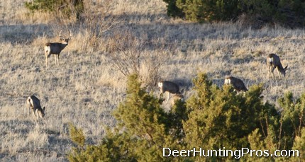 Mule Deer Hunting at Caprock Canyons State Park