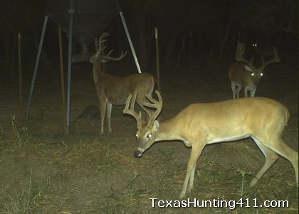 Deer Hunting in Texas: Feeding Protein for Deer Management