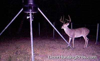Cass County Deer Hunting - Deer Lease in Cass County