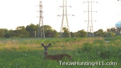 Deer Hunting Regulations Change in Texas: Rockwall County, Dallas County, Collin County and Galveston County