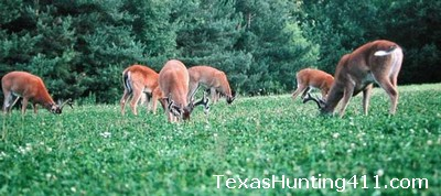 Food Plots in Texas