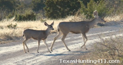 Mule Deer Hunting in Texas - CWD Check Stations