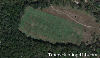 Texas Food Plots
