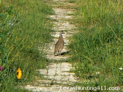 Habitat Management for Texas Wildlife