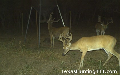 Deer Hunting in Texas - Protein Feeding