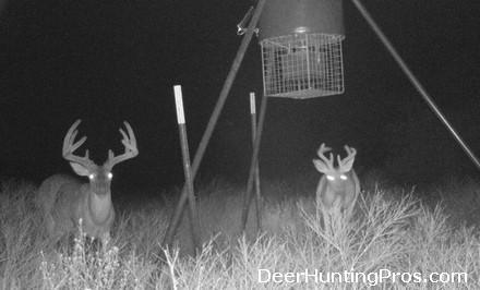 Deer Die Offs - Deer Hunting