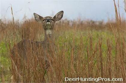 Deer Smelling Me - Scent Eliminator for Hunting - Deer Hunting