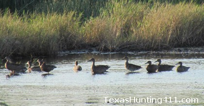 Public Duck Hunting at J.D. Murphree WMA