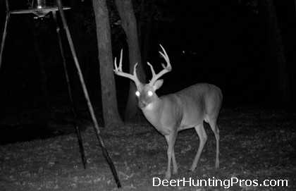 Attracting Bucks During the Deer Hunting Season