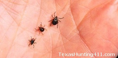 Deer Ticks - Not a Deer Disease, But Commonly Found on Whitetail