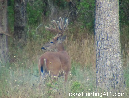Federal Lands in Texas - More Public Hunting Lands in Texas Possible