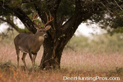 Whitetail Deer Hunting, Deer Lease in Mills County Texas