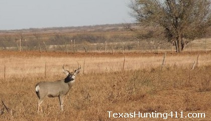 Mule Deer Hunting in West Texas