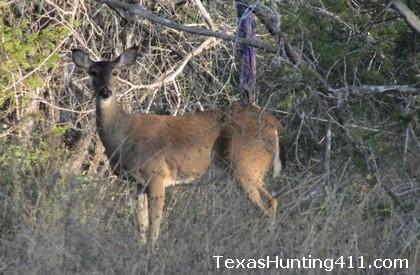 Public Hunting Texas - Texas Public Hunting Land