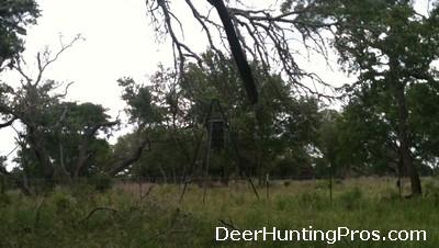 Deer Feeder Pen Size for Deer Hunting