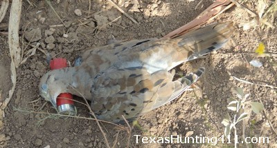 Texas North Zone Dove Hunting