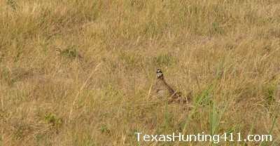 Texas Hunting - Wildlife Management Key to Healthy Populations, Hunting