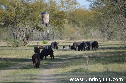 Hog Hunting in Texas