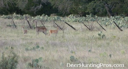 Deer Hunting Tips for Open Habitat
