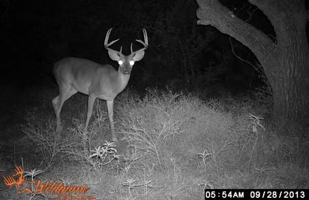 Trail Camera Deer Surveys for Hunting