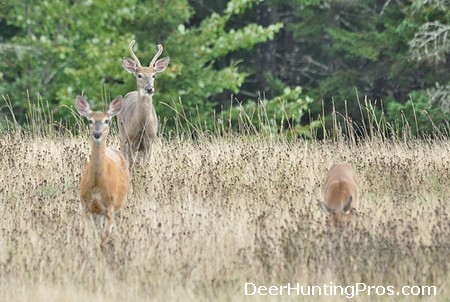 Can You Shoot Out a Deer Herd?