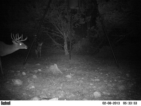 Post-Season Game Camera Surveys for Deer