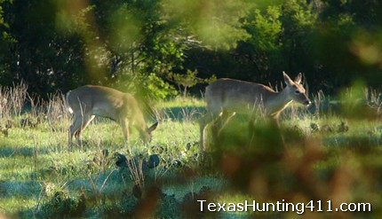 Texas Hunting: The Best Habitat for Whitetail Deer and Native Wildlife
