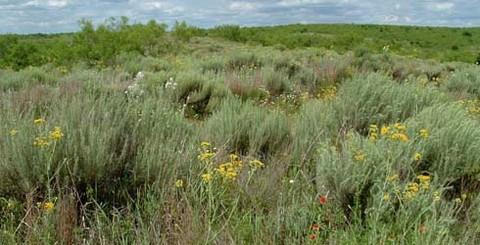 Yoakum Dunes Wildlife Management Area