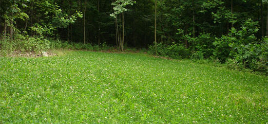 Warm Season Food Plots for Spring and Summer Plantings