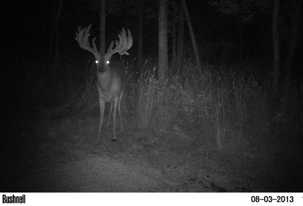King: The Lee Buck is the Third Biggest Free-Range Buck in Texas History