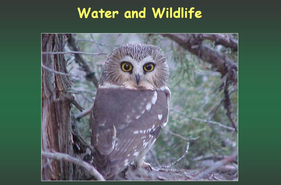 Water for Wildlife Slideshow